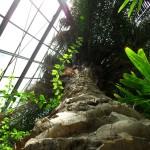Gradina Botanica Cluj - Plan Vertical